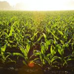 Discover what it takes to make your small farm more eco-friendly